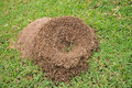 Ant s nest the on greensward Royalty Free Stock Photo
