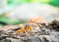 Ant in the small world macro shot of walking across cracked wood Royalty Free Stock Image