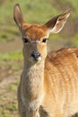 Antelope Stock Photo