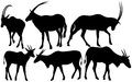 Antelopes vector Stock Photos