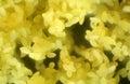 Anther Of Hosta Flower In Micr...