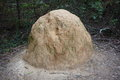 Anthill in bushland a big clay an australian national park Stock Image