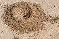 Anthill sand in the desert Royalty Free Stock Images