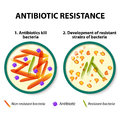 Antibiotic resistance diagram showing the difference between non resistant bacteria and resistant bacteria non resistant bacteria Stock Images