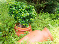 Antique Amphora in the garden Royalty Free Stock Photo