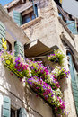 Antique  building with terrace with pink blooming petunia flowers  in Venezia Royalty Free Stock Photo