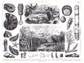 1874 Antique Print of Prheistoric Jurassic and Cambrian Period Plants and Animals Royalty Free Stock Photo