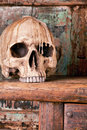 Antique skull Royalty Free Stock Photography