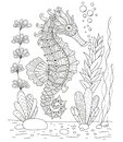 Antistress coloring book seahorse in the Zen style
