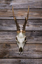 Antler or horn on wooden background hunting trophy rustic Royalty Free Stock Images