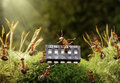 Ants play music on microchip, fairytale Stock Photos