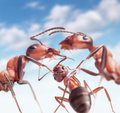 Ants under peaceful sky love in family focus on whelp Stock Photography