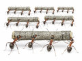 Ants work with logs teamwork concept teams of Royalty Free Stock Photos