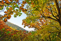 The antumn maple leaves of zu mountain photo taken in china s hebei province qinhuangdao city scenic spot time is october Royalty Free Stock Images