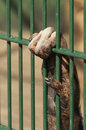 Ape hand holding cage grill close up of green Stock Photos