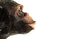 Ape profile a small toy face made in rubber and isolated over white Royalty Free Stock Photo
