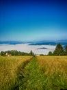 Apfelbaum sonne blumen wolken wiese Lizenzfreies Stockfoto