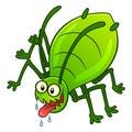 Aphid pest