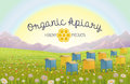 Apiary in alpine meadows in mountains. Honey Farm. Beehive set. Bee honeycomb.