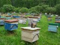 Apiary in the meadow a lot of wooden beehives on grass summer Royalty Free Stock Photography