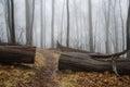 Appalachian Trail path Royalty Free Stock Photo