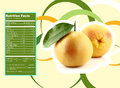 Appetizing grapefruit nutrition facts