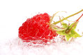 Appetizing raspberries fresh in a water Stock Photos