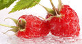 Appetizing raspberries fresh in a water Royalty Free Stock Photo