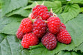 Appetizing raspberry Royalty Free Stock Photo