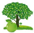 Apple with apple tree illustration of closeup behind covered in fruit white background Royalty Free Stock Photos