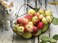 Apple basket and cat with frtesh ripe Stock Photography