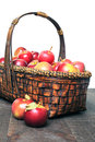 Apple basket a full of fresh picked apples Stock Photography