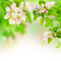 Mela fiore