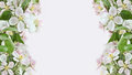 Apple blossom borders on pink background Stock Photography