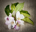Apple blossom on linen pink closeup rustic woven fabric Stock Photo