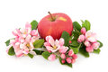 Apple a day red with flower blossom over white background royal gala variety Royalty Free Stock Photo