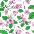 Apple flowers tree blossom, bud, leaf, branch colorful botanical sketch hand drawn on white, seamless vector