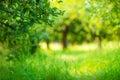 Apple Garden Green Sunny Backg...