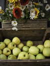 Apple golden delicious in on wooden box on the street fruit and vegetable market in florence above is one basket with the Royalty Free Stock Photography