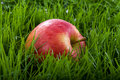 Apple in the Grass Stock Photography