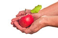Apple in hand Royalty Free Stock Photography