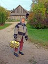 Apple harvest elderly country woman carries a basket of apples Royalty Free Stock Image