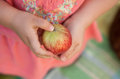 Apple harvest girl Royalty Free Stock Image