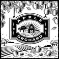 Apple Orchard black and white Stock Photography