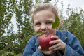 Apple picking a little girl pretends to bite into a bright red delicious Stock Photo