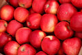 Apple picking season hq stock photo of ripe red apples Royalty Free Stock Photo