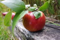 Apple still life photo of country on railroad tie Royalty Free Stock Image