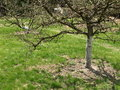 Apple tree Stock Photos