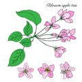 Apple tree blossom flower, bud, leaves, branch vector colorful botanical sketch hand drawn on white, vintage