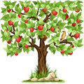 Apple tree cartoon isolated on white background Stock Photo